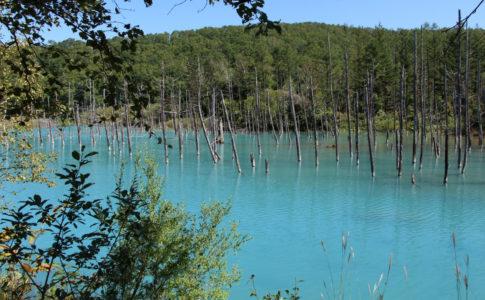 晴れた日の美瑛の青い池