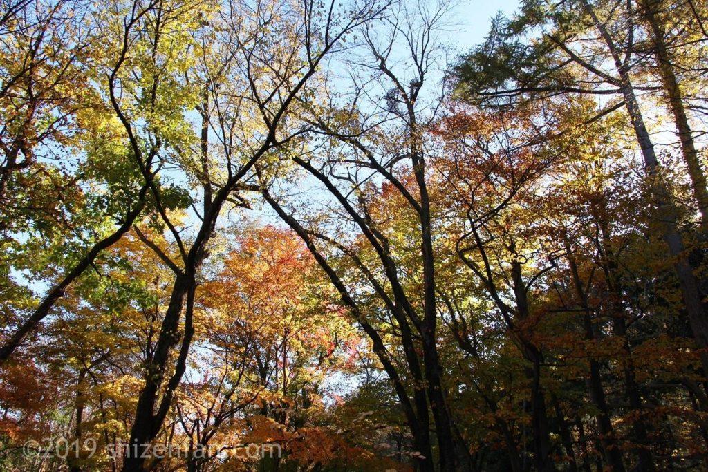札幌の円山公園の晩秋の紅葉