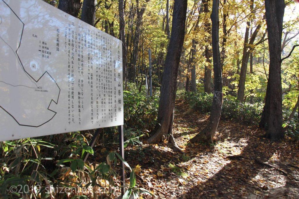 秋の札幌円山登山、動物園裏登山道と原始林の説明案内板