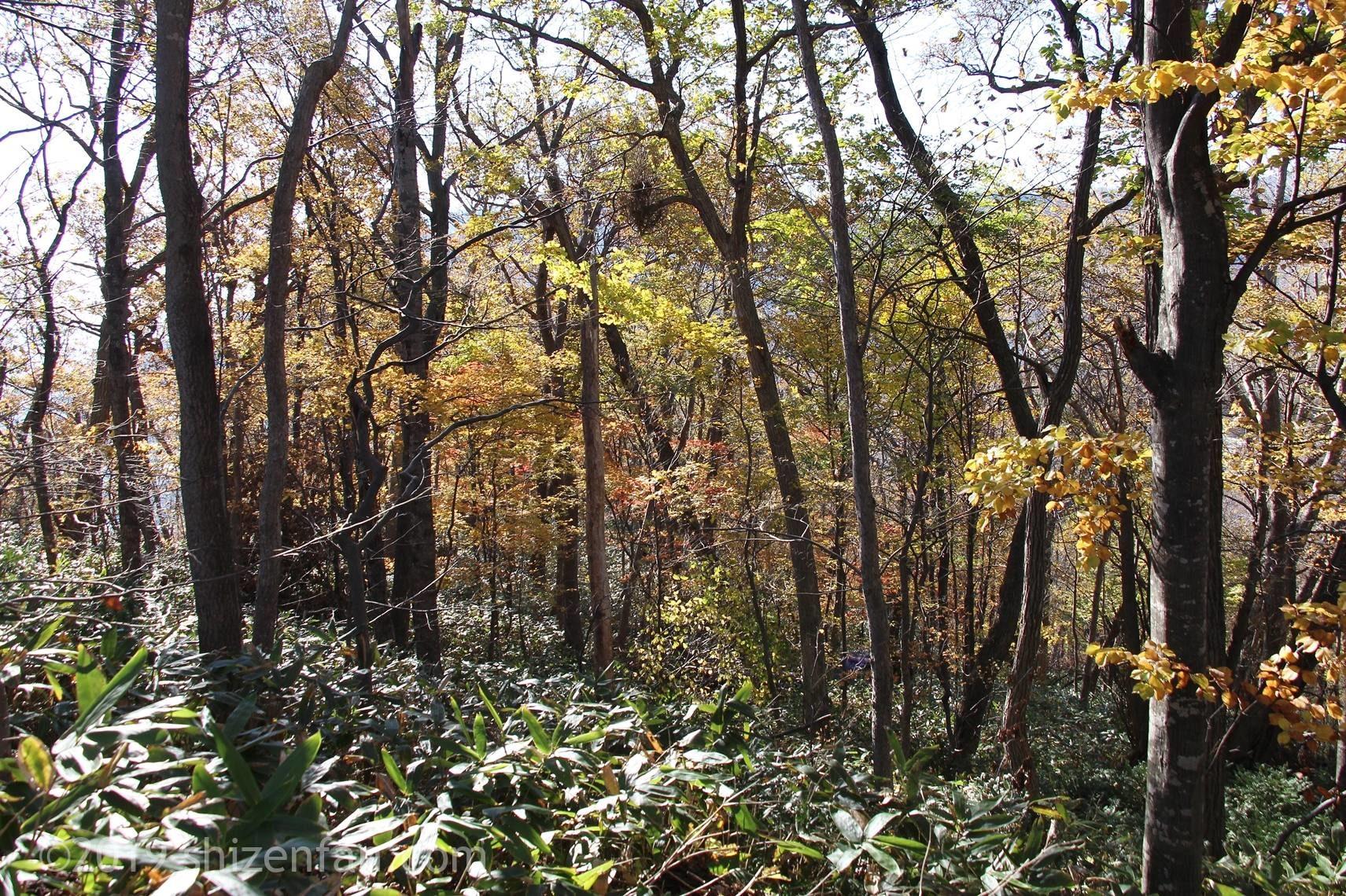 晩秋の札幌円山、動物園裏コース登山風景