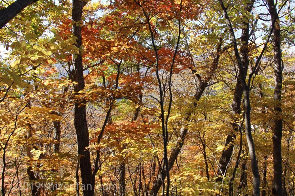 晩秋の札幌円山登山、紅葉した木々のイメージ写真