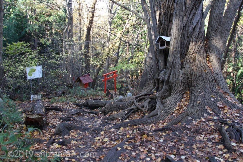 晩秋の円山登山、八十八ヶ所付近の大きな木の幹と小鳥の家と鳥居