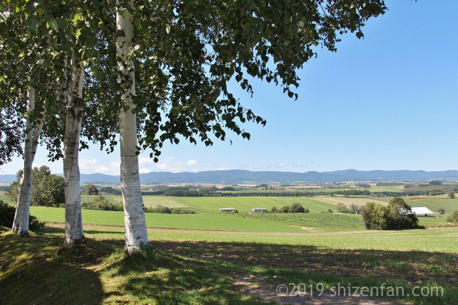 三愛の丘公園の白樺の木、背景には山々と丘