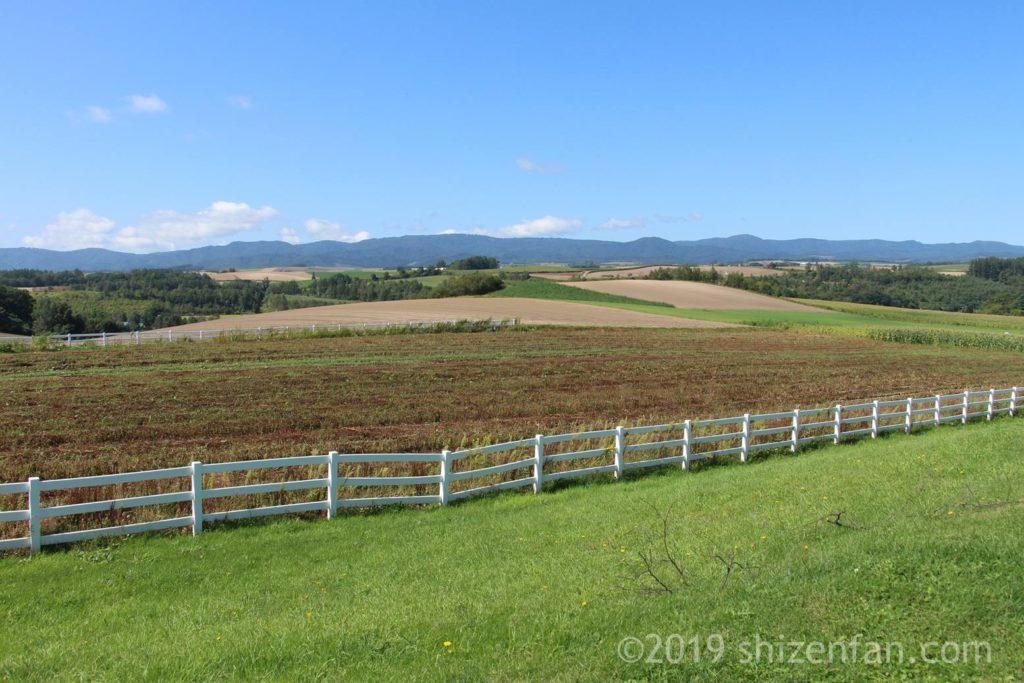 美瑛の新栄の丘からの景色