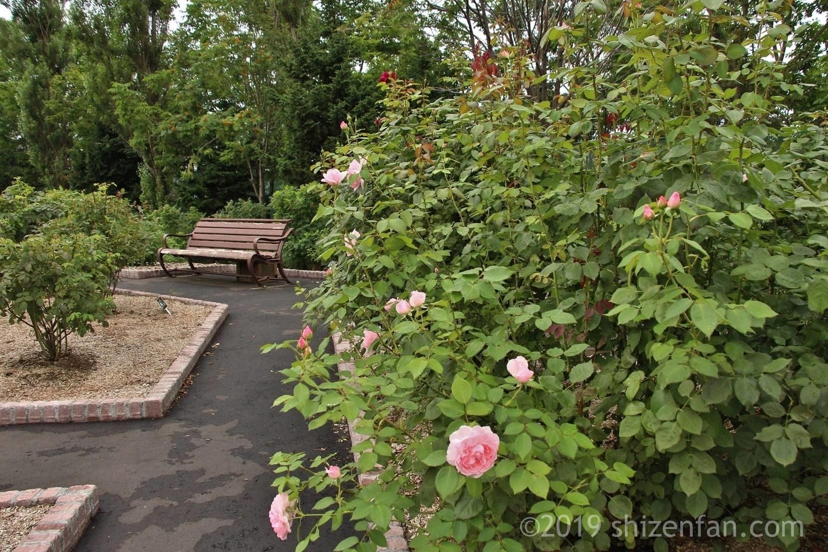 羽幌バラ園内の通路とベンチ