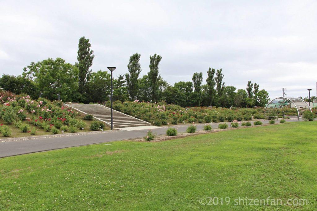 羽幌バラ園の側の芝生広場と通路