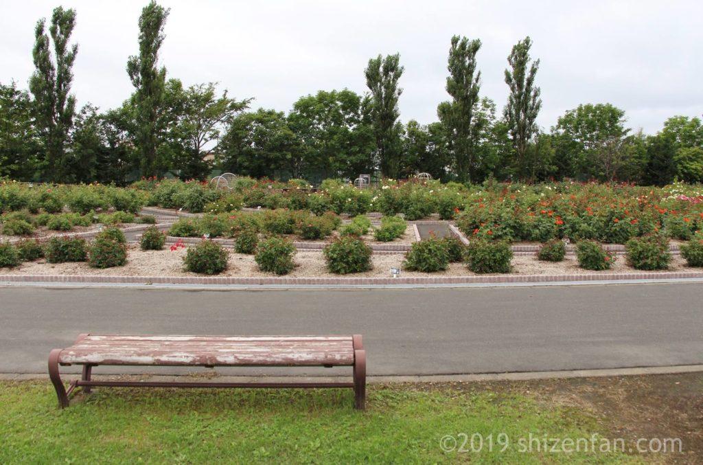 羽幌バラ園の外側通路にあるベンチ、背景にバラ園