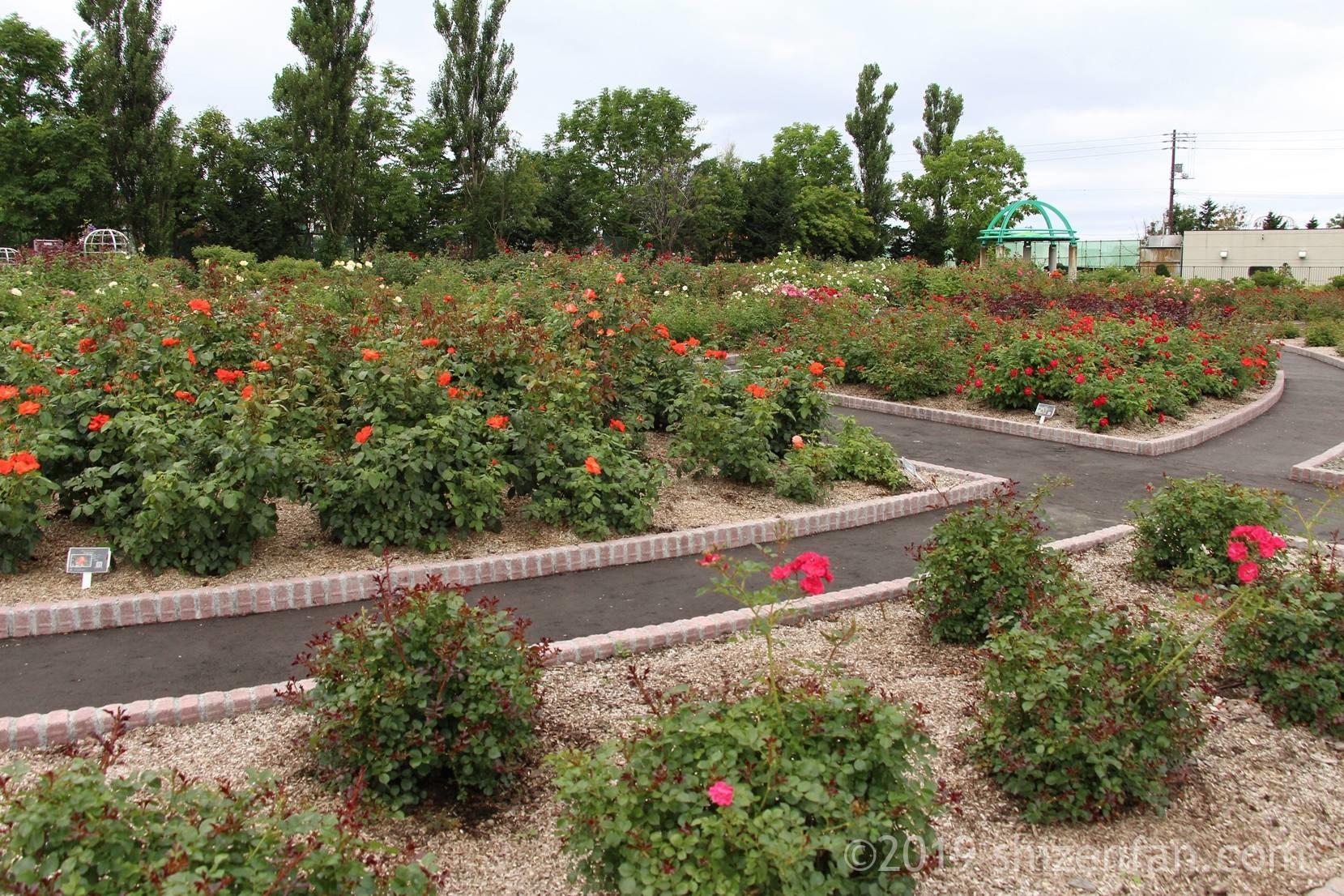 8月中旬の羽幌バラ園全景イメージ