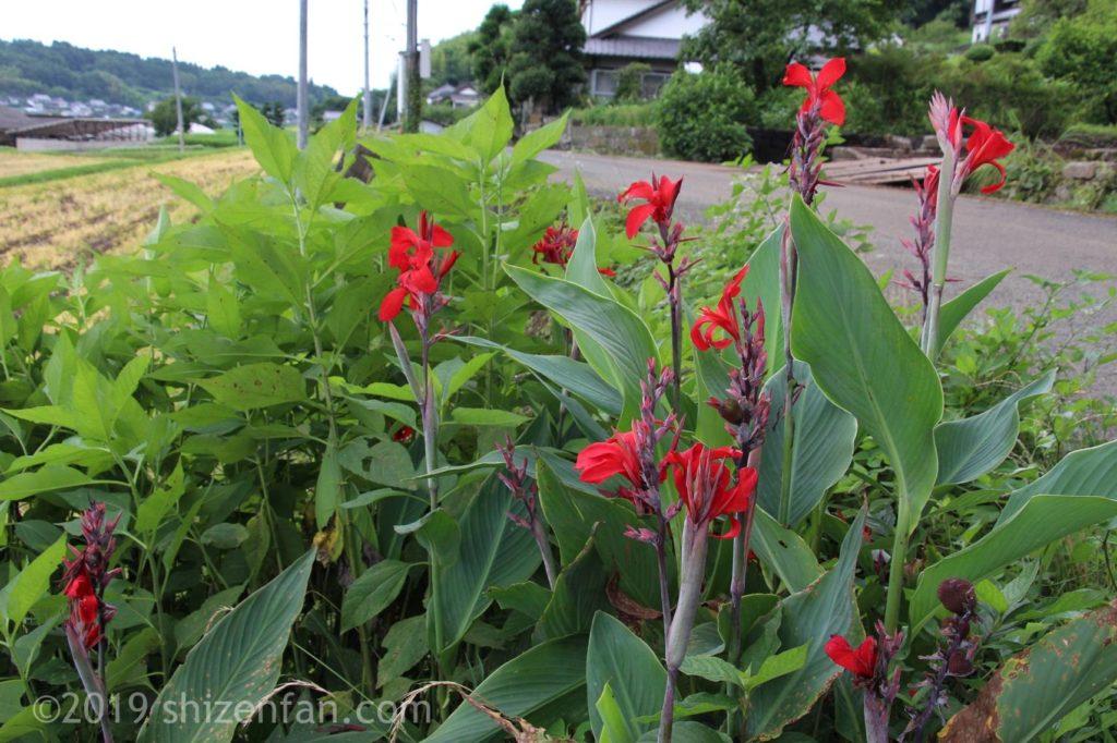 原尻の滝の近くにある緒方二宮八幡社前の赤い花