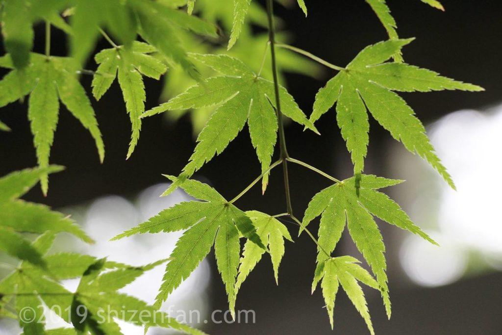 緒方二宮八幡社の葉のイメージ写真