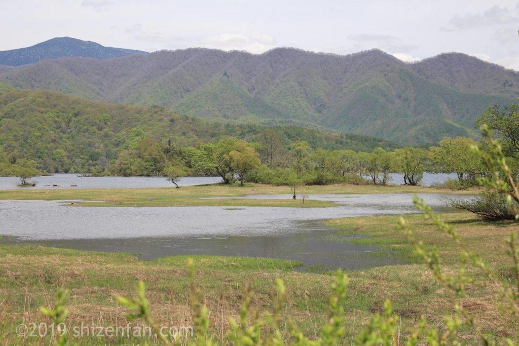 桧原湖の沼地