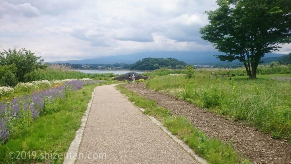河口湖湖畔の遊歩道、脇に花壇