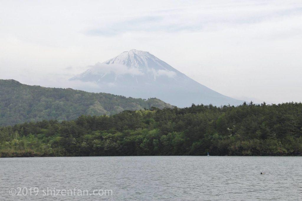 河口湖越しの富士山クローズアップ