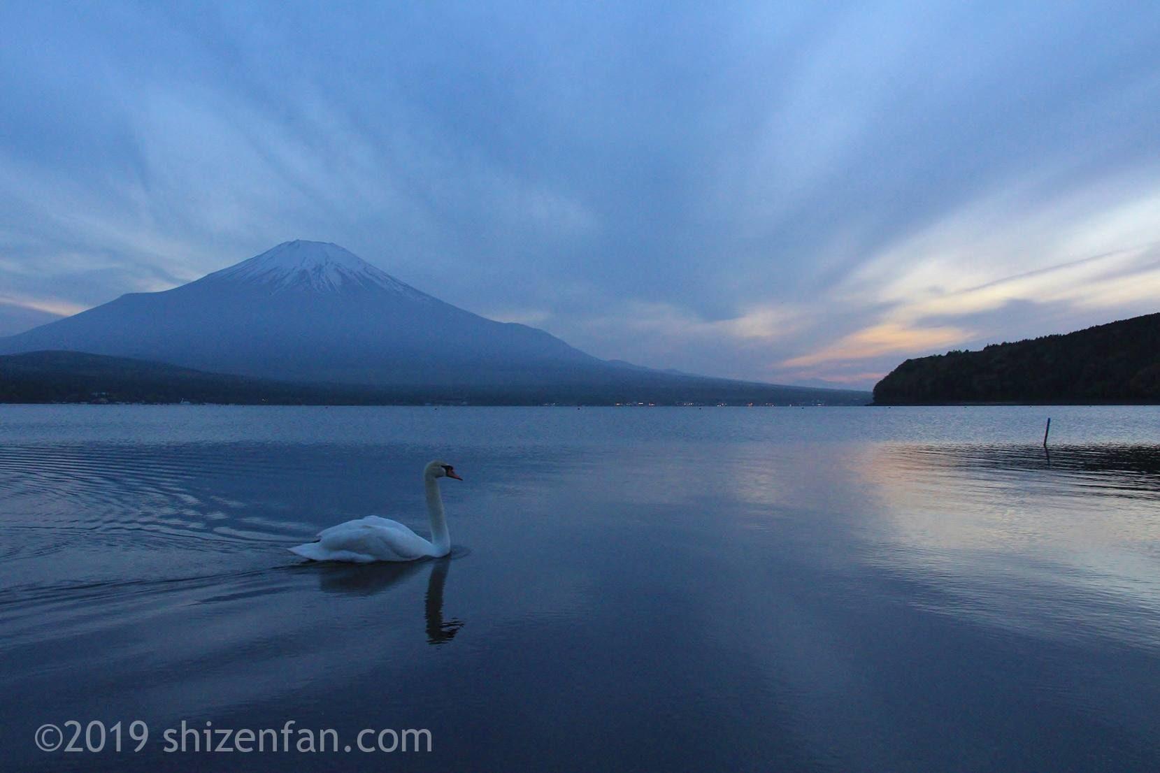 夕暮れの山中湖と一羽の白鳥