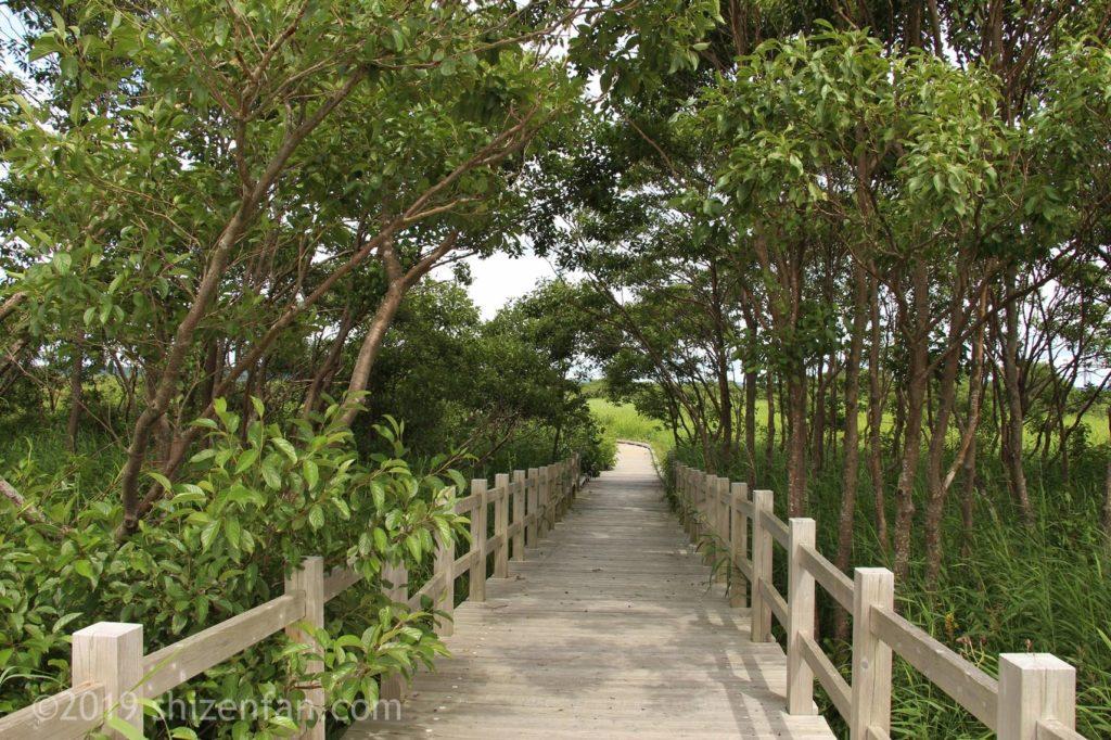 幌延ビジターセンター(下サロベツ原野園地)の木道