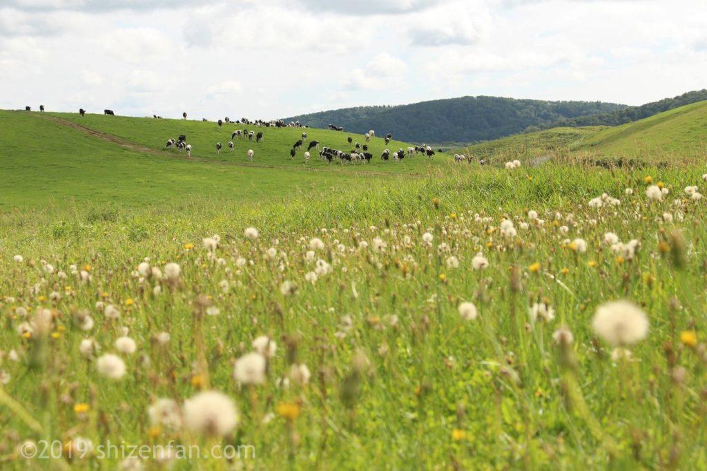 豊富町営大規模草地牧場