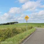 豊富町営大規模草地牧場内の道路と牛横断注意の標識