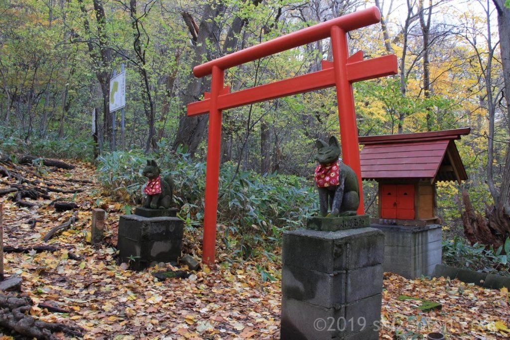 秋の札幌円山原始林、登山道の鳥居とお稲荷さん