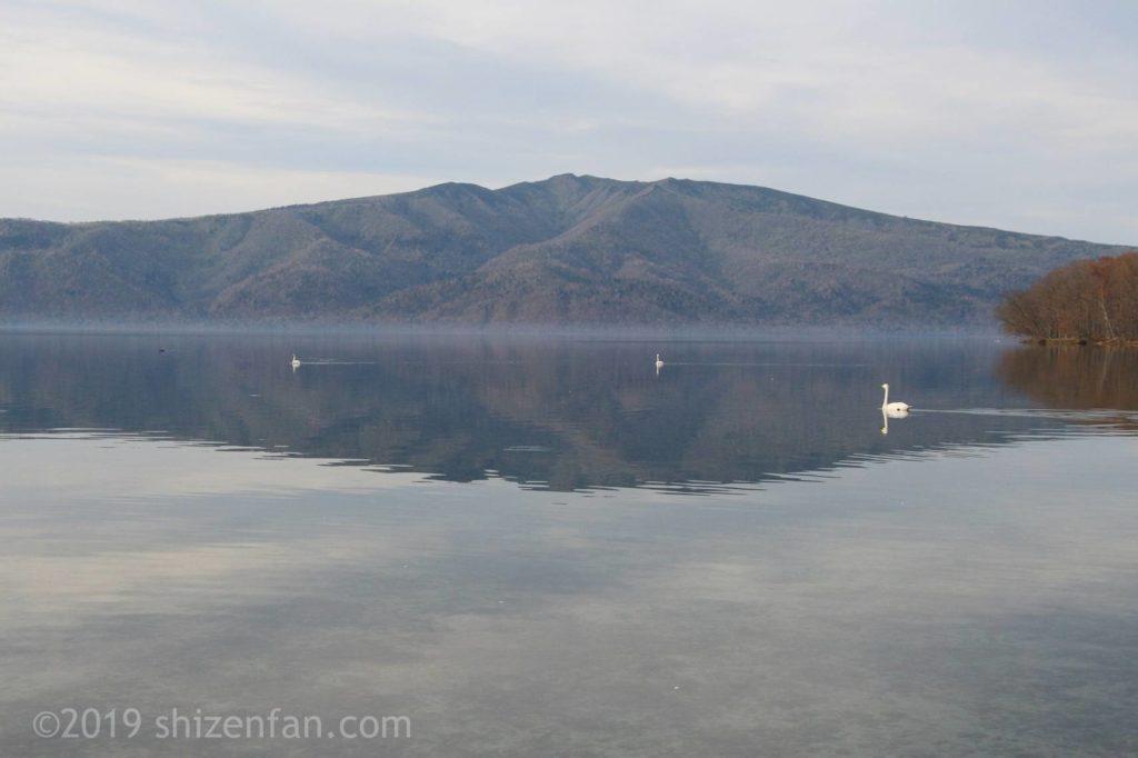 11月上旬の屈斜路湖と白鳥