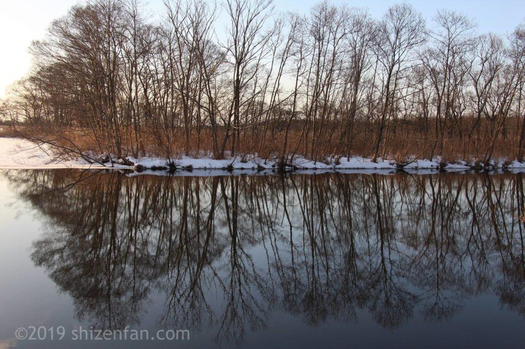 冬のウトナイ湖、湖面に映り込む木々