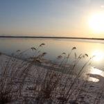 冬のウトナイ湖の朝、湖畔で朝日を浴びるススキと湖