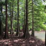 篠栗九大の森・水辺の森(2019夏)