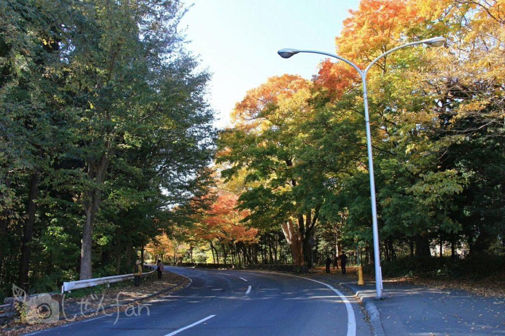 紅葉期の札幌円山公園内の道路