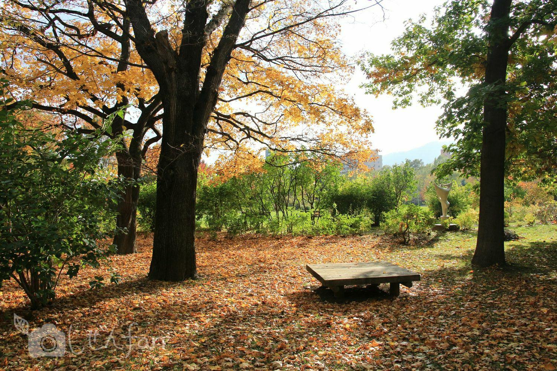 秋の札幌中島公園、木々に囲まれたベンチ