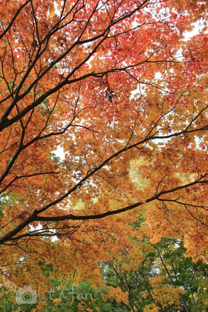 赤黄緑の紅葉イメージ写真