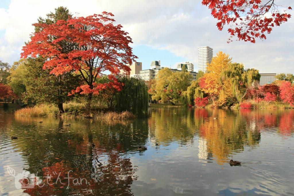 夕暮れの札幌中島公園の池の紅葉