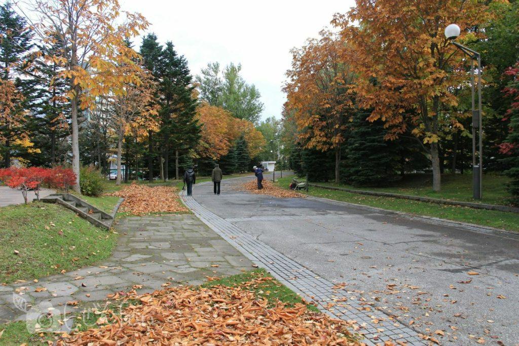 秋の札幌中島公園内の歩道とかき集められた落ち葉