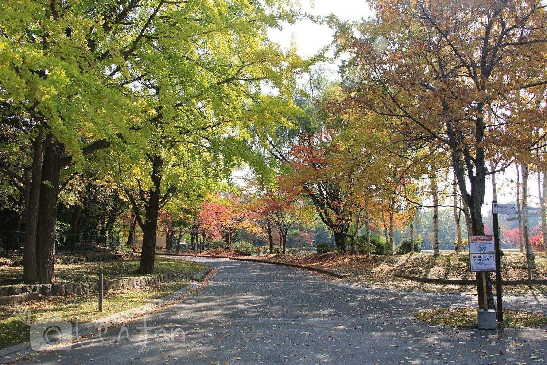 紅葉初期の中島公園内の通路