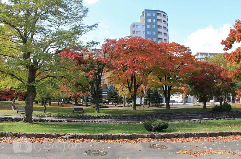 秋の札幌中島公園、創成川付近