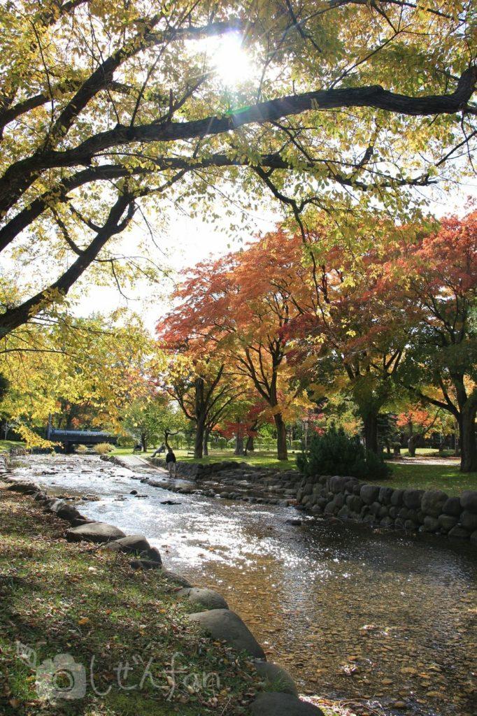 秋の札幌中島公園内創成川沿いの紅葉