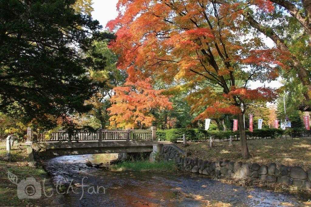 紅葉期の札幌中島公園、創成川に架かる橋と紅葉する木