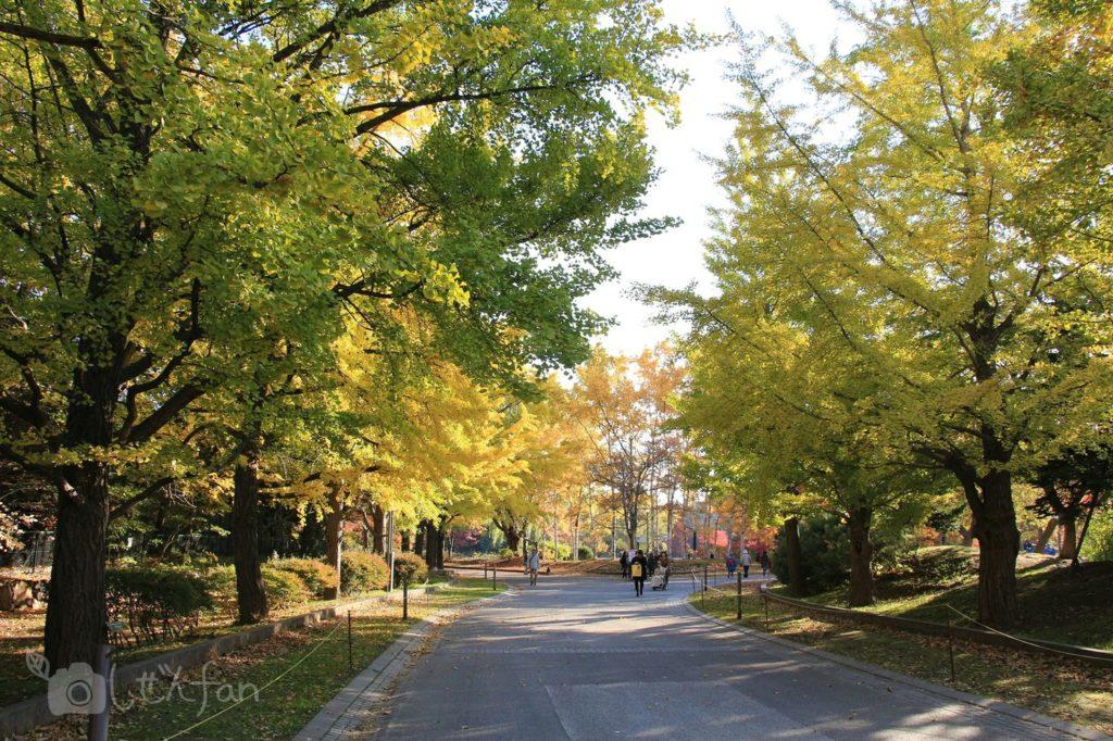 秋の札幌中島公園内通路、黄葉を始める銀杏の木々
