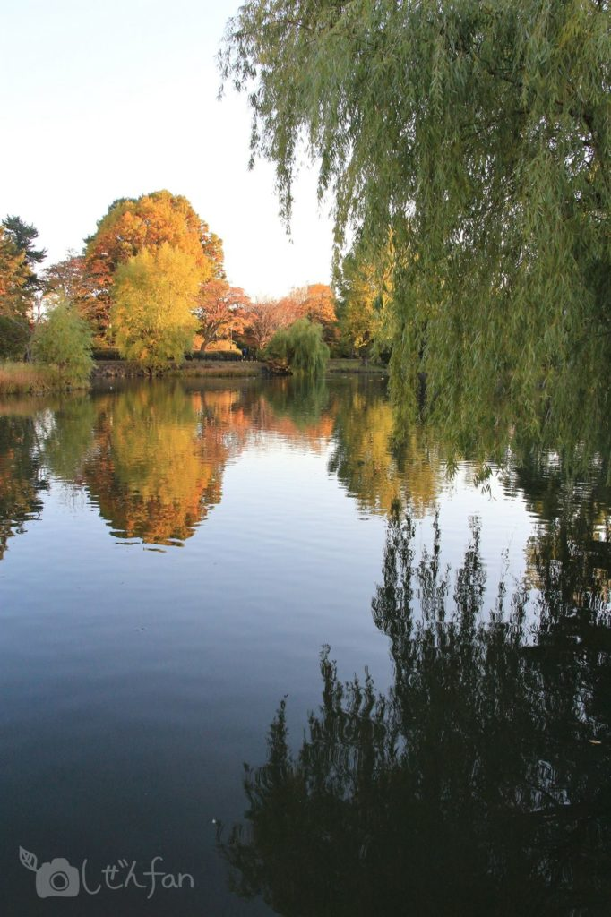 夕暮れ時の札幌中島公園、池と柳