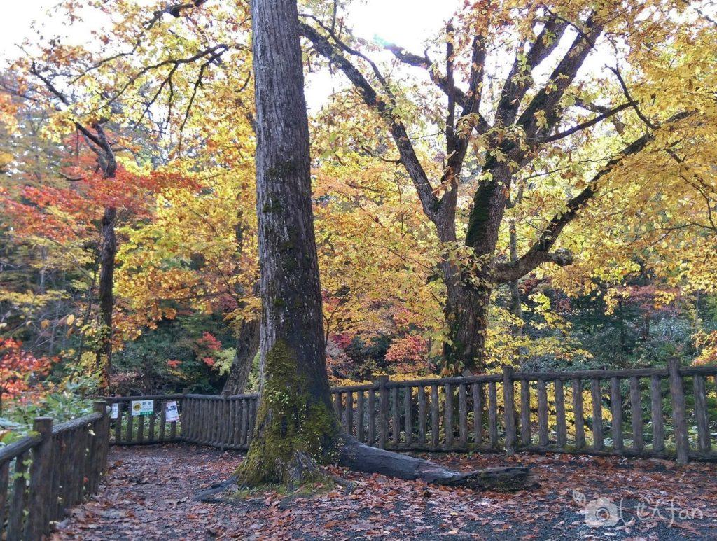 秋の恵庭渓谷 白扇の滝絶景ポイント付近の様子