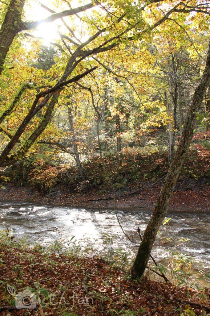 秋の恵庭渓谷