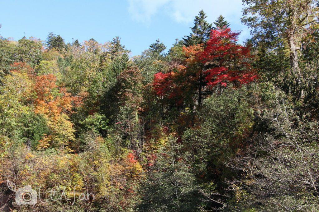 秋の恵庭渓谷の紅葉