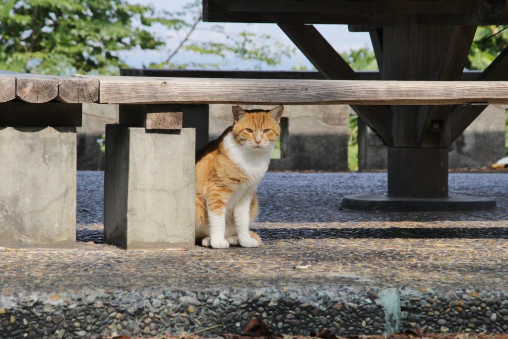 福岡西公園の猫