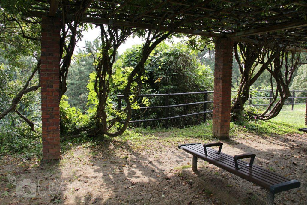 福岡西公園 東側展望台の藤棚