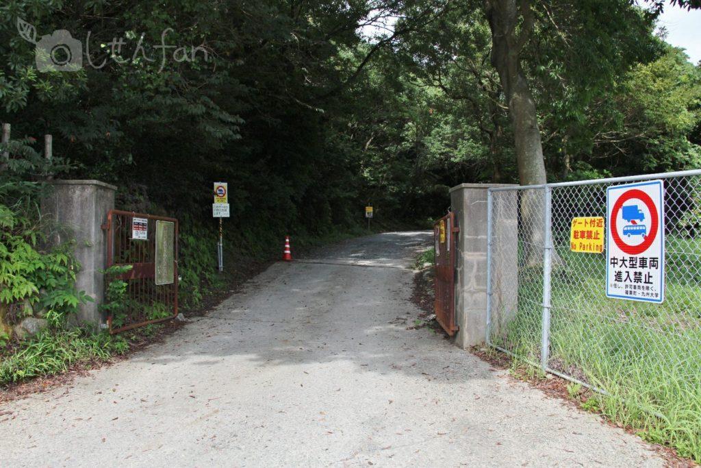 篠栗九大の森、北駐車場への道
