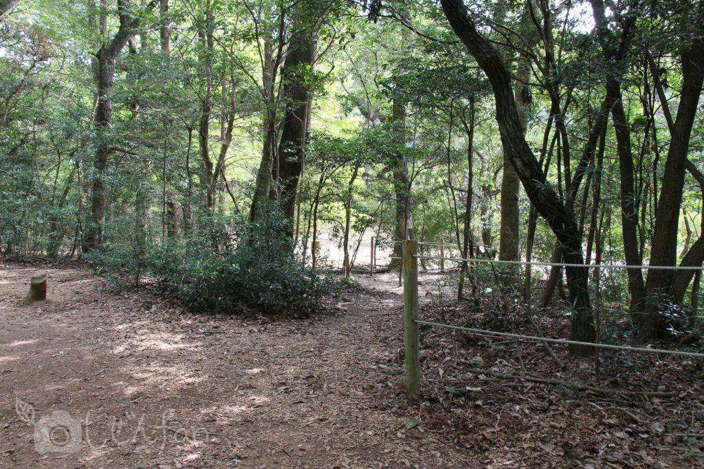 2019.10.6 篠栗九大の森 水辺の森周辺