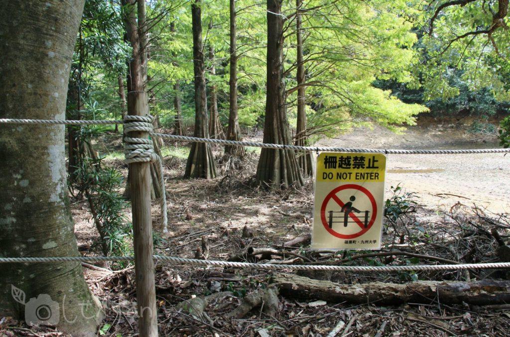 2019.10.6 篠栗九大の森 水辺の森