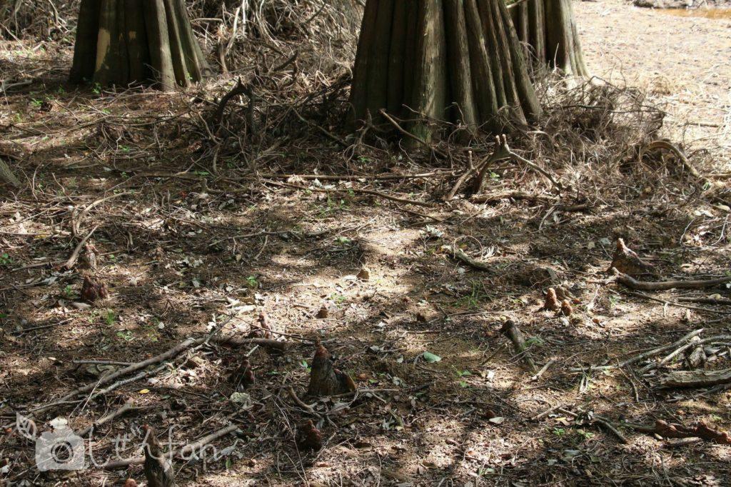 2019.10.6 篠栗九大の森 干上がった水辺の森