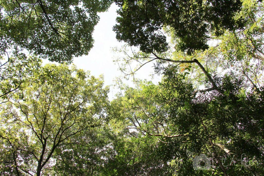 2019.10.6 篠栗九大の森 見上げた木々イメージ