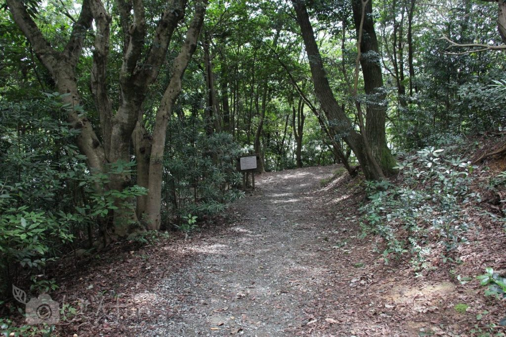 篠栗九大の森、北駐車場から入ってすぐの遊歩道の様子
