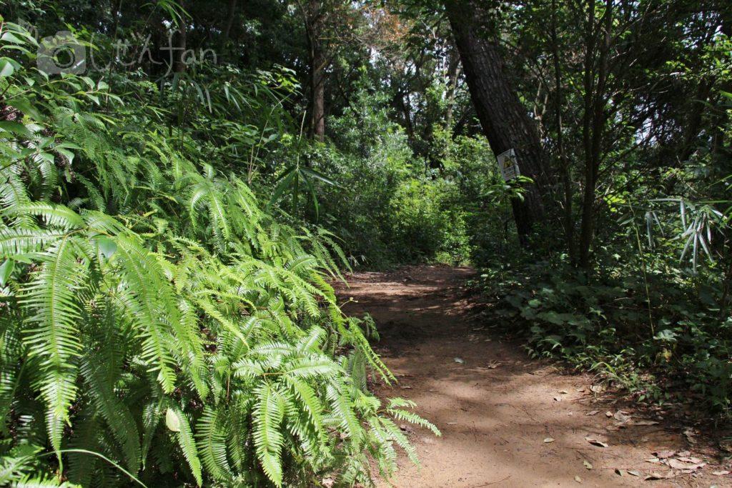 篠栗九大の森、水辺の森までの遊歩道の様子
