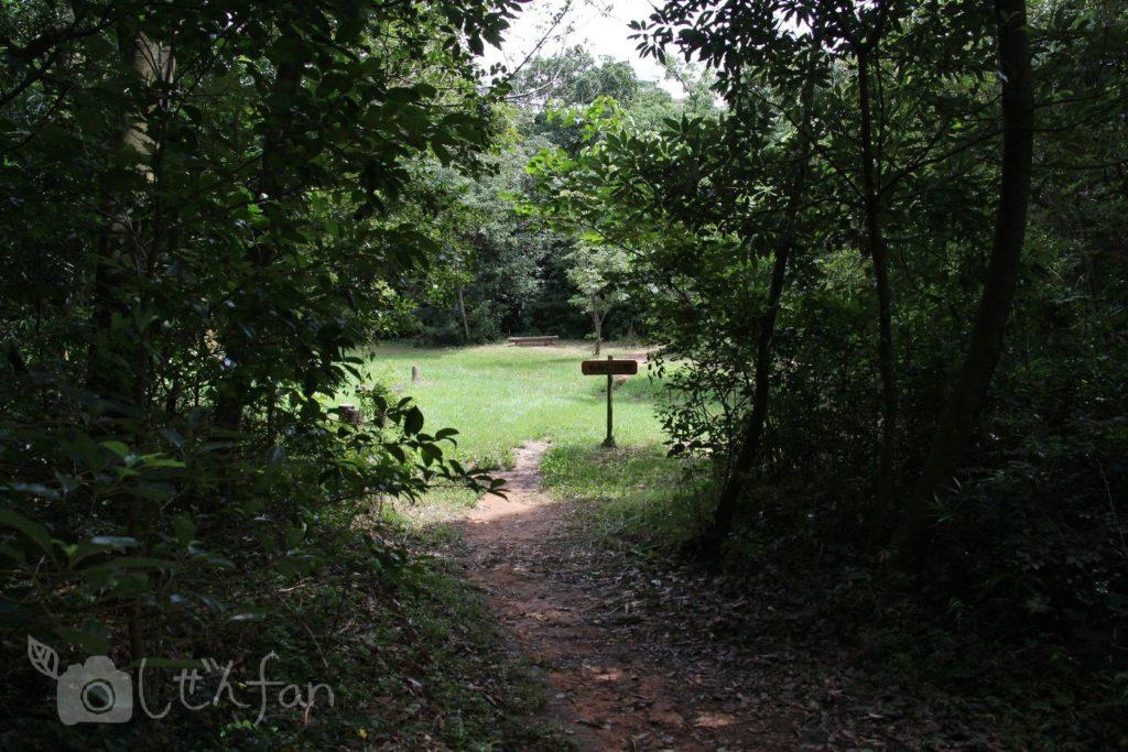 篠栗九大の森、もみじ広場への小路